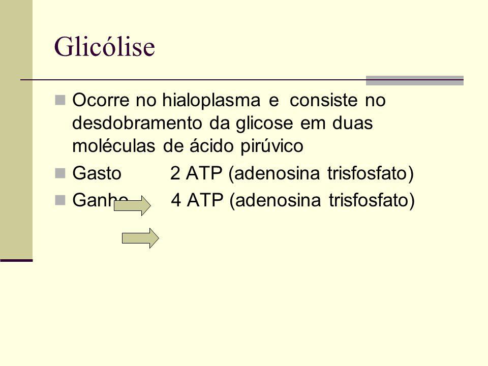 Glicólise Ocorre no hialoplasma e consiste no desdobramento da glicose em duas moléculas de ácido pirúvico.