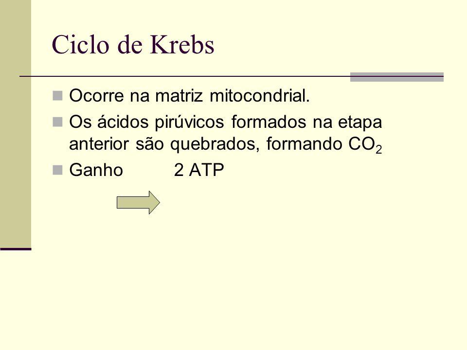 Ciclo de Krebs Ocorre na matriz mitocondrial.