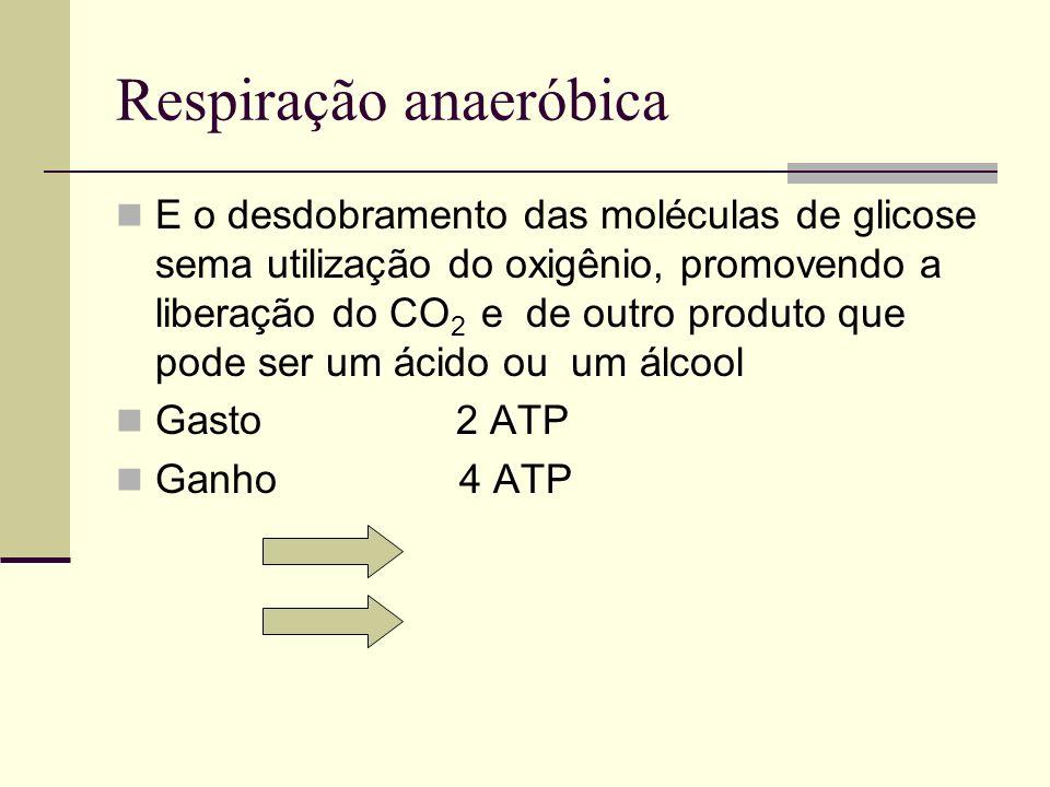 Respiração anaeróbica