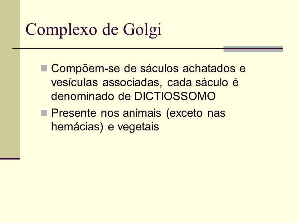 Complexo de Golgi Compõem-se de sáculos achatados e vesículas associadas, cada sáculo é denominado de DICTIOSSOMO.