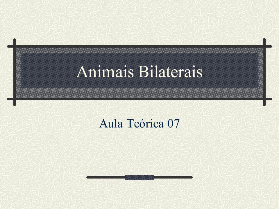 Animais Bilaterais Aula Teórica 07