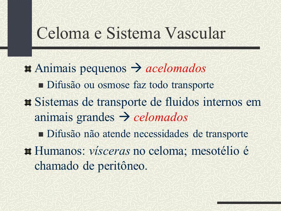 Celoma e Sistema Vascular
