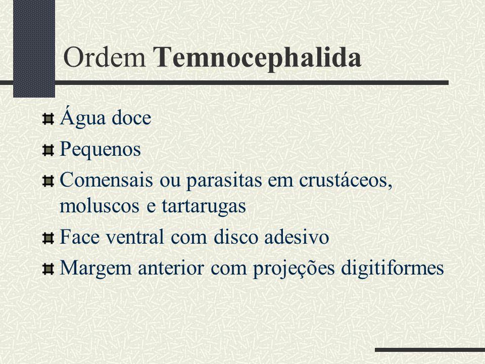 Ordem Temnocephalida Água doce Pequenos