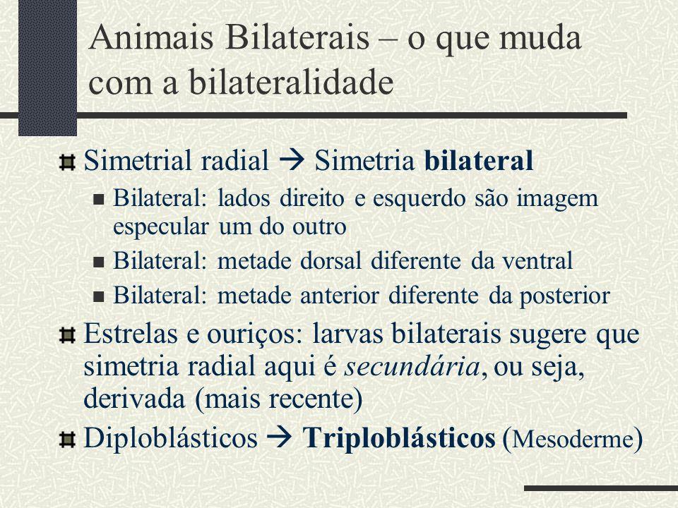 Animais Bilaterais – o que muda com a bilateralidade