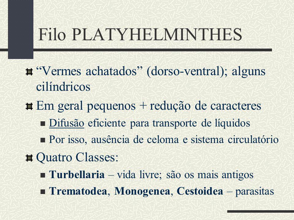 Filo PLATYHELMINTHES Vermes achatados (dorso-ventral); alguns cilíndricos. Em geral pequenos + redução de caracteres.