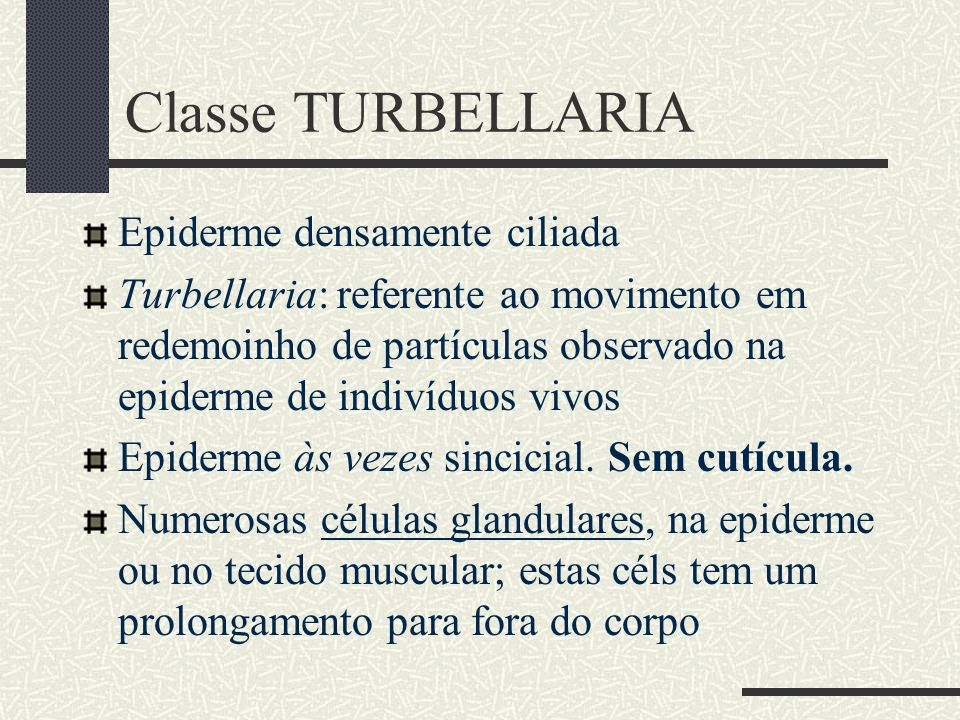 Classe TURBELLARIA Epiderme densamente ciliada