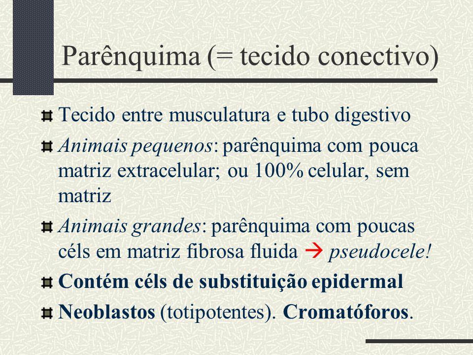 Parênquima (= tecido conectivo)