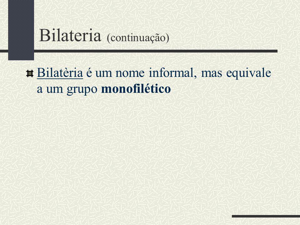 Bilateria (continuação)