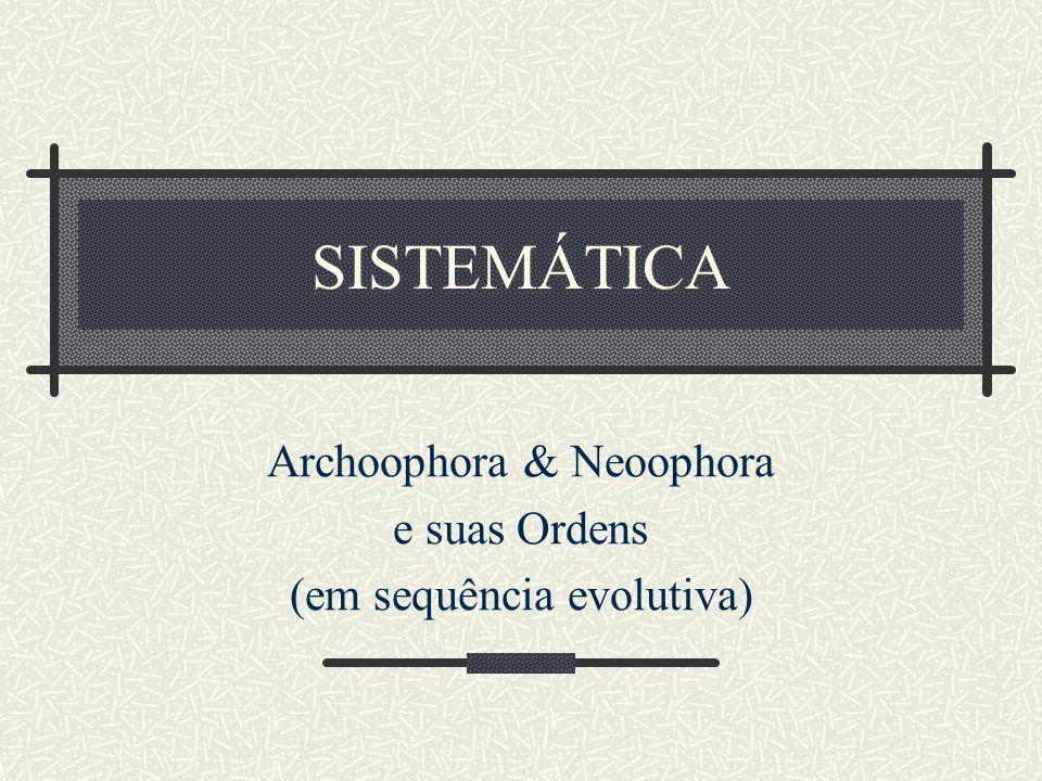 Archoophora & Neoophora e suas Ordens (em sequência evolutiva)