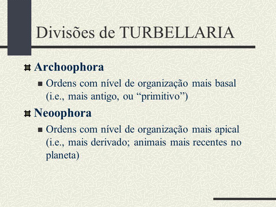 Divisões de TURBELLARIA