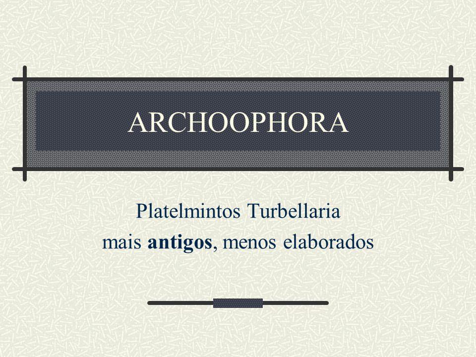Platelmintos Turbellaria mais antigos, menos elaborados
