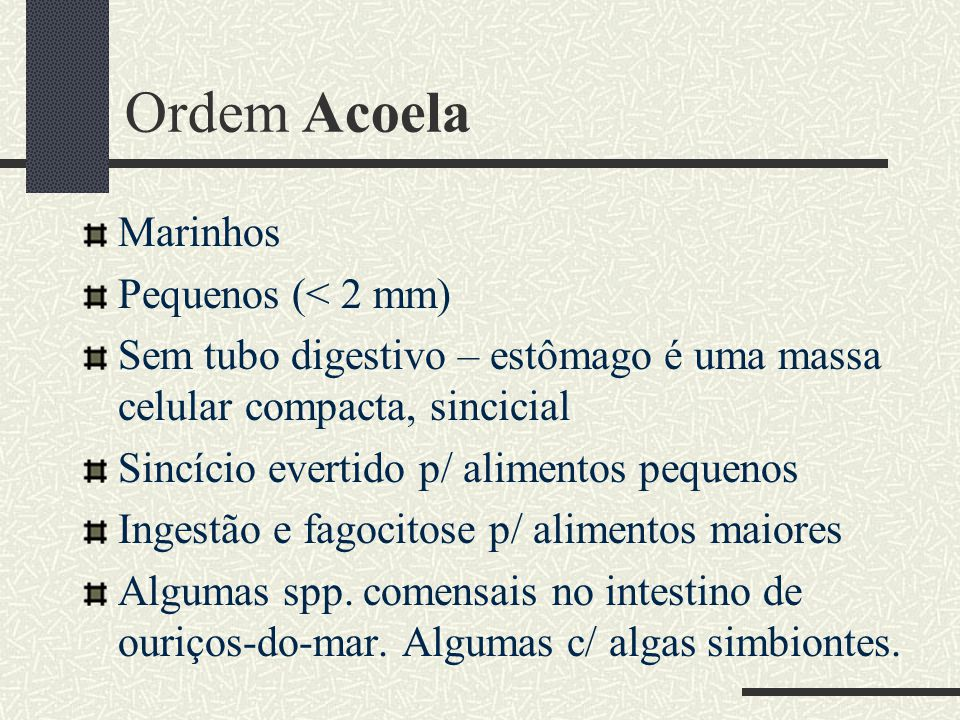 Ordem Acoela Marinhos Pequenos (< 2 mm)