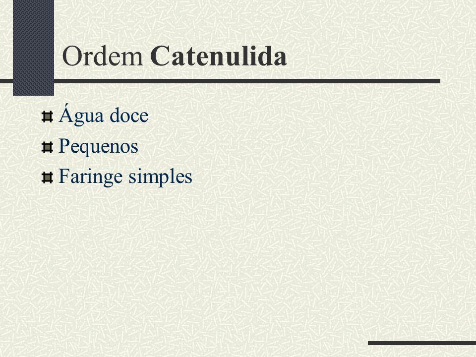 Ordem Catenulida Água doce Pequenos Faringe simples