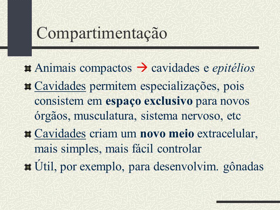 Compartimentação Animais compactos  cavidades e epitélios