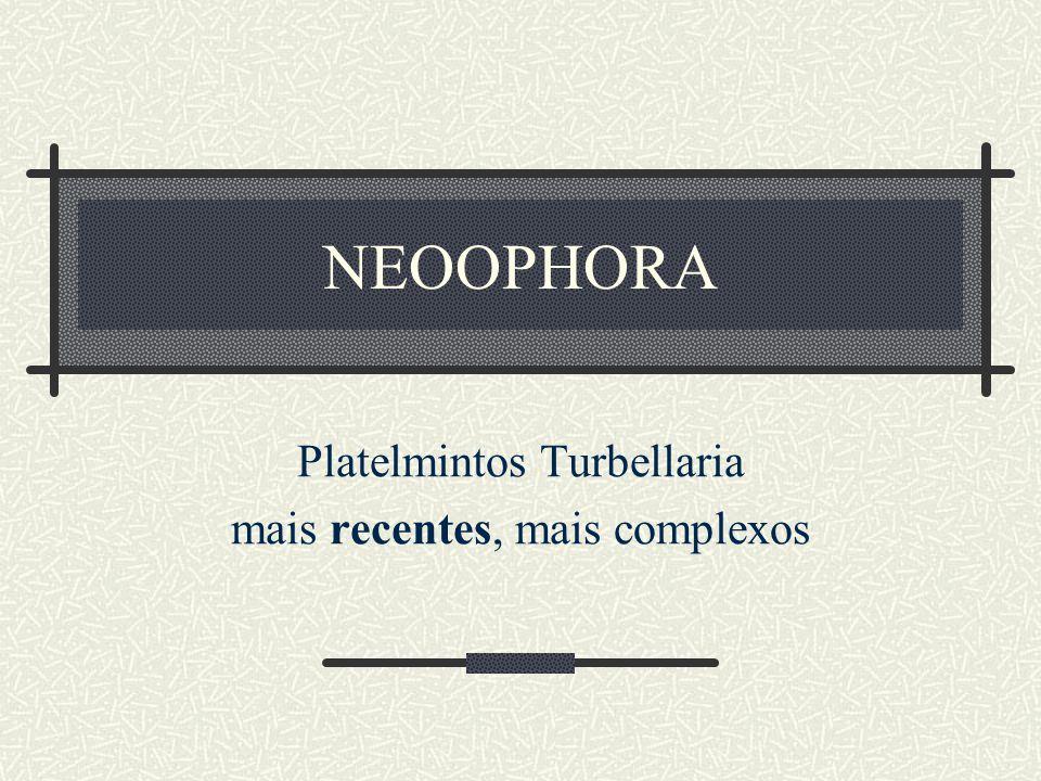 Platelmintos Turbellaria mais recentes, mais complexos