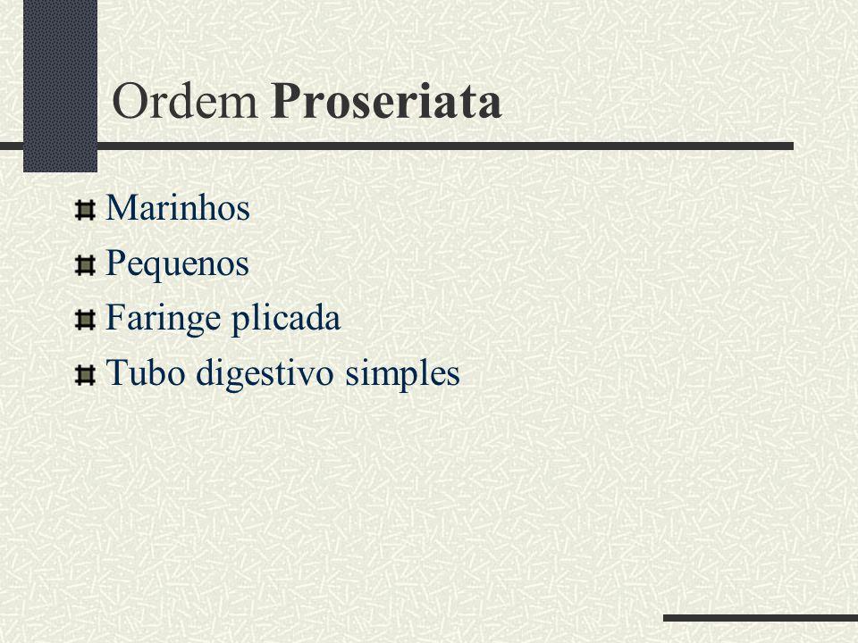 Ordem Proseriata Marinhos Pequenos Faringe plicada
