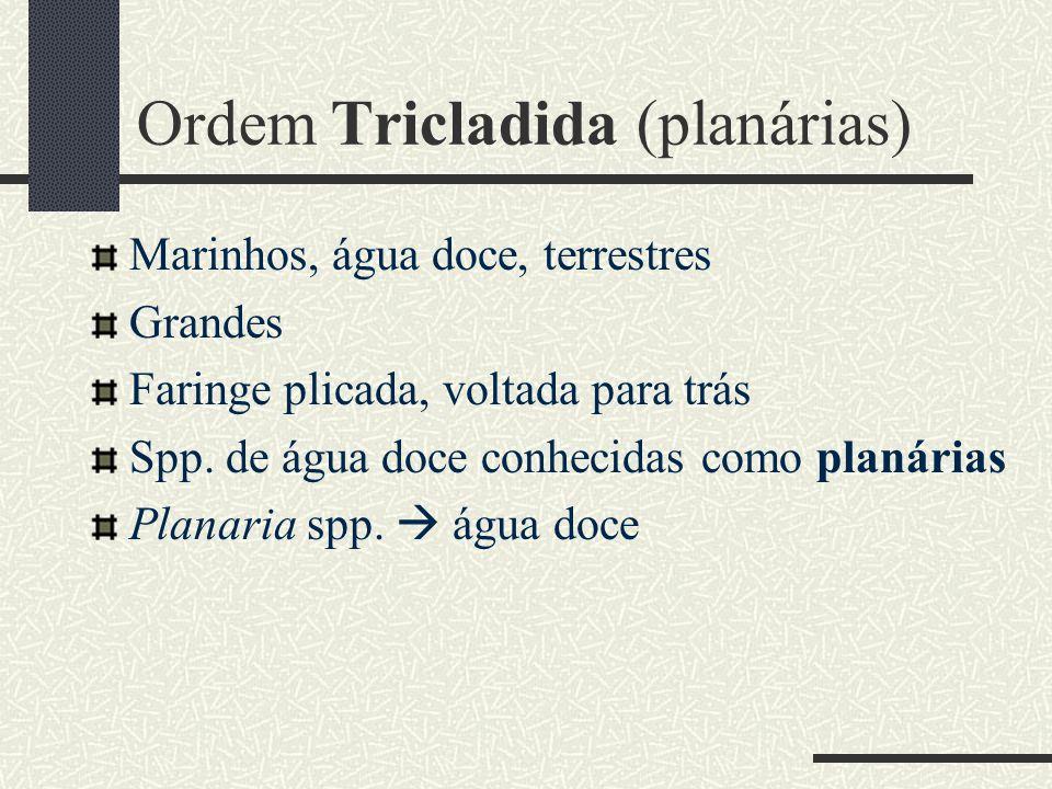 Ordem Tricladida (planárias)