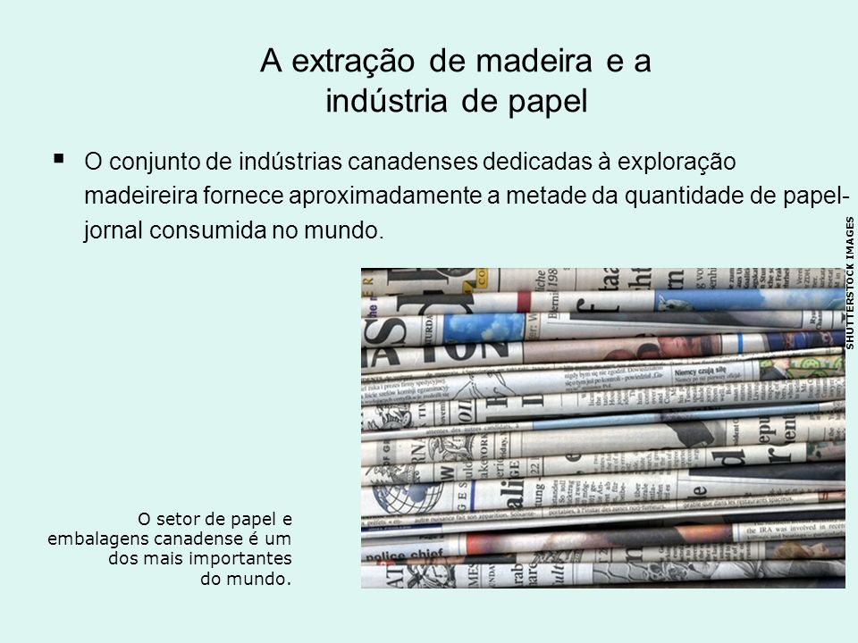 A extração de madeira e a indústria de papel