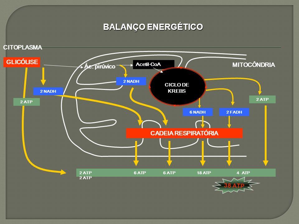BALANÇO ENERGÉTICO CITOPLASMA GLICÓLISE MITOCÔNDRIA