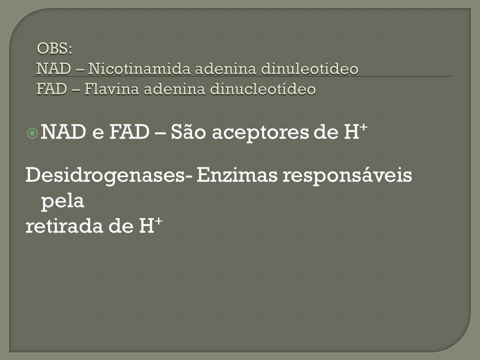 NAD e FAD – São aceptores de H+