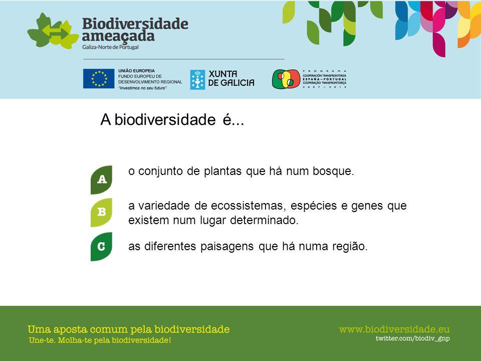A biodiversidade é... o conjunto de plantas que há num bosque.