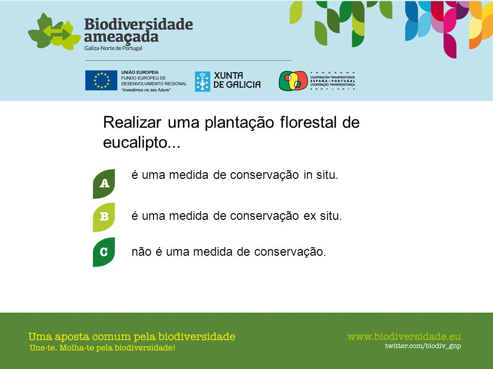 Realizar uma plantação florestal de eucalipto...