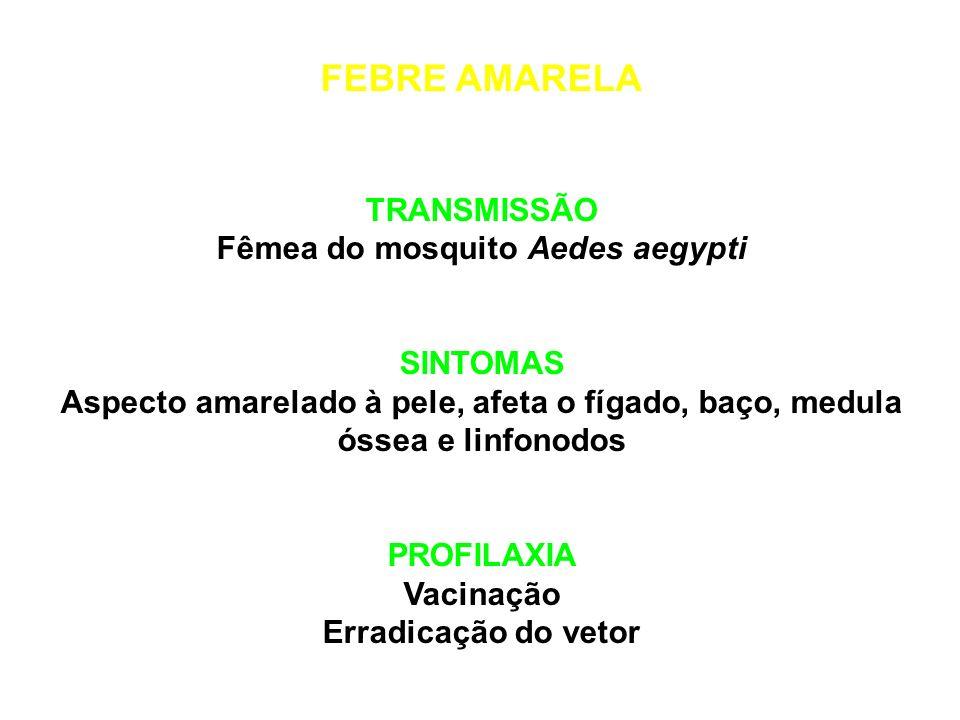 Fêmea do mosquito Aedes aegypti