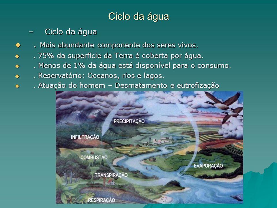 Ciclo da água . Mais abundante componente dos seres vivos.