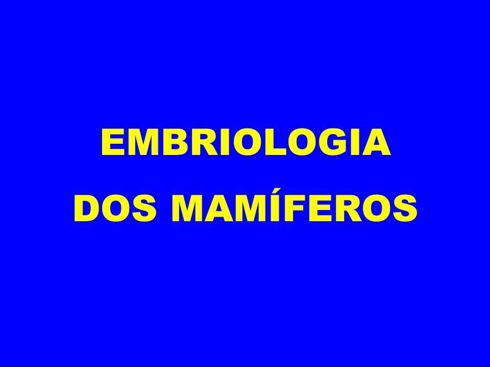 EMBRIOLOGIA DOS MAMÍFEROS