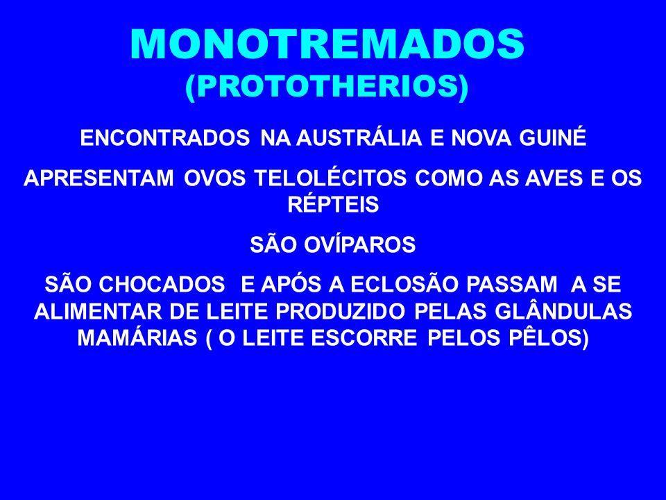 MONOTREMADOS (PROTOTHERIOS) ENCONTRADOS NA AUSTRÁLIA E NOVA GUINÉ