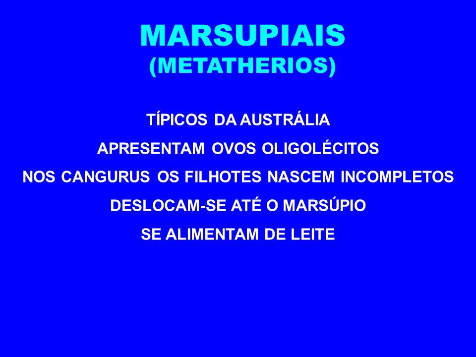 MARSUPIAIS (METATHERIOS) TÍPICOS DA AUSTRÁLIA