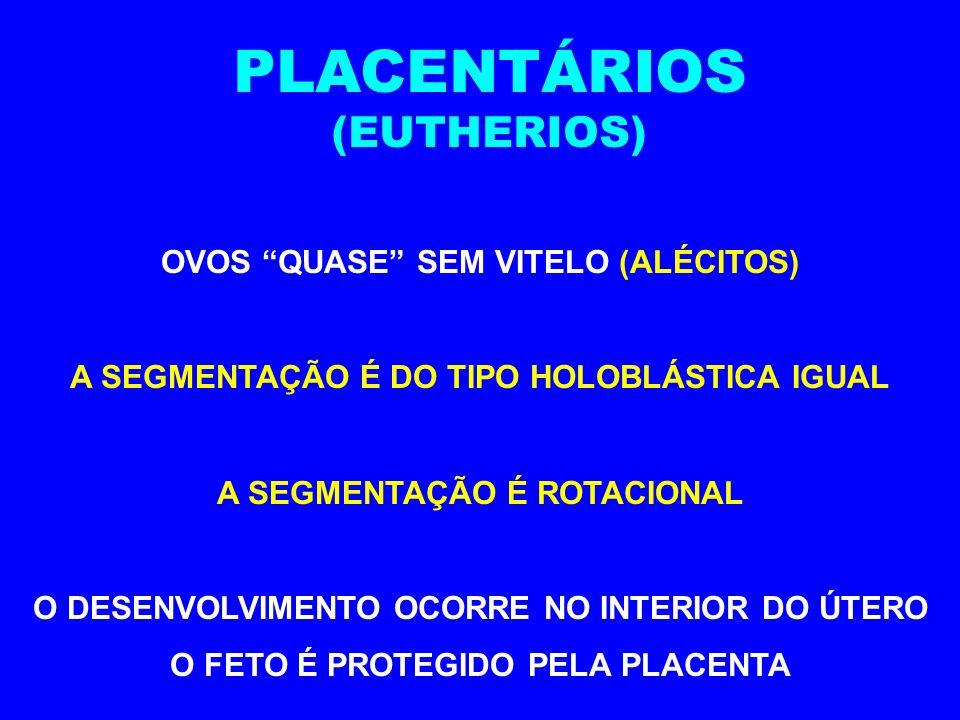 PLACENTÁRIOS (EUTHERIOS) OVOS QUASE SEM VITELO (ALÉCITOS)