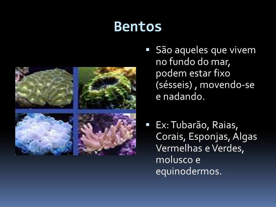 Bentos São aqueles que vivem no fundo do mar, podem estar fixo (sésseis) , movendo-se e nadando.