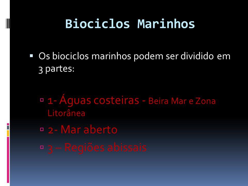 Biociclos Marinhos 1- Águas costeiras - Beira Mar e Zona Litorânea