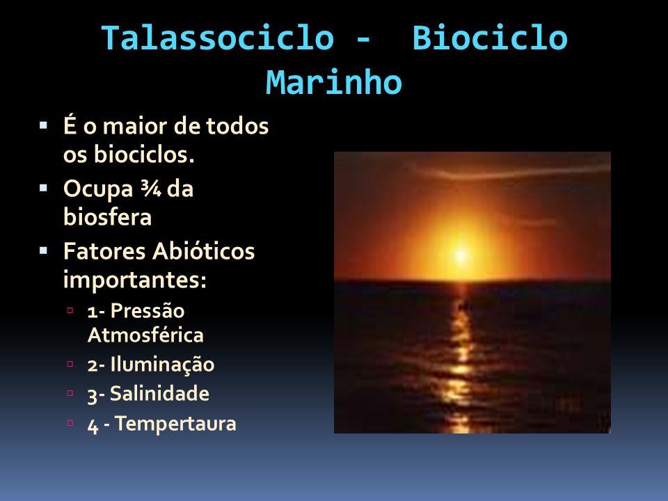Talassociclo - Biociclo Marinho