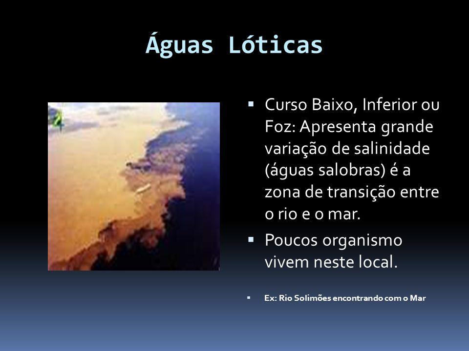Águas Lóticas Curso Baixo, Inferior ou Foz: Apresenta grande variação de salinidade (águas salobras) é a zona de transição entre o rio e o mar.