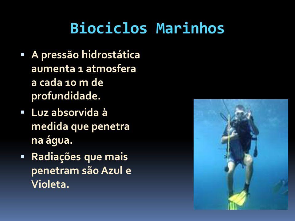 Biociclos Marinhos A pressão hidrostática aumenta 1 atmosfera a cada 10 m de profundidade. Luz absorvida à medida que penetra na água.