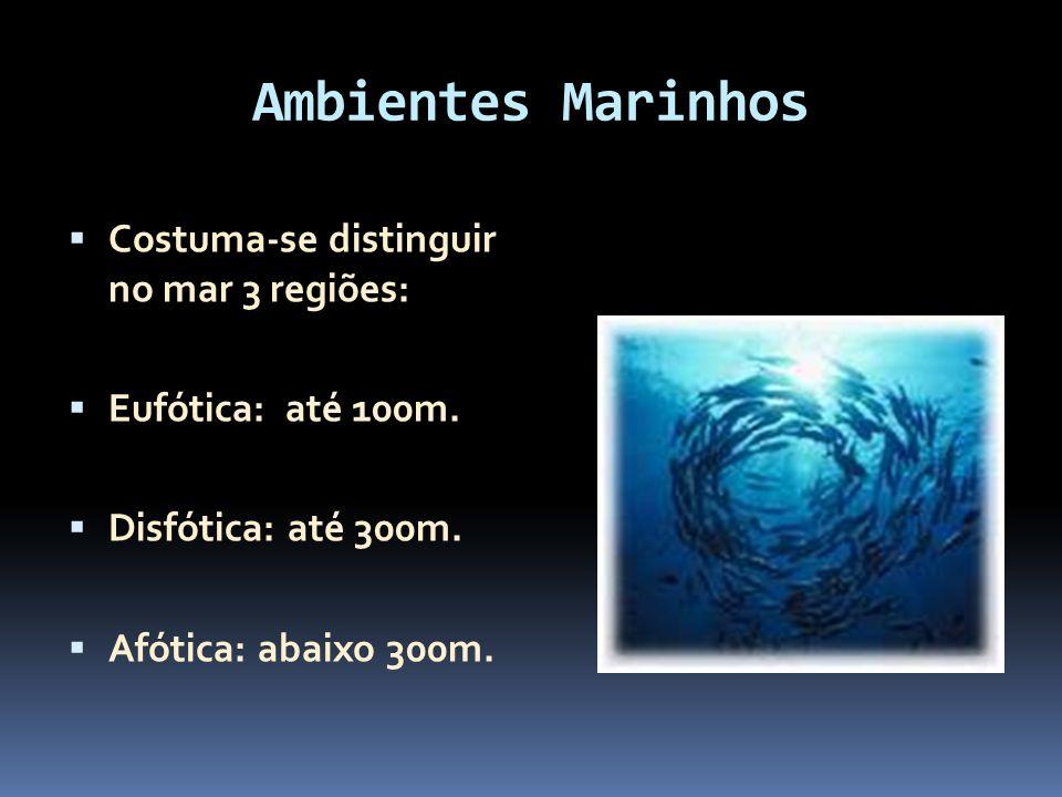 Ambientes Marinhos Costuma-se distinguir no mar 3 regiões:
