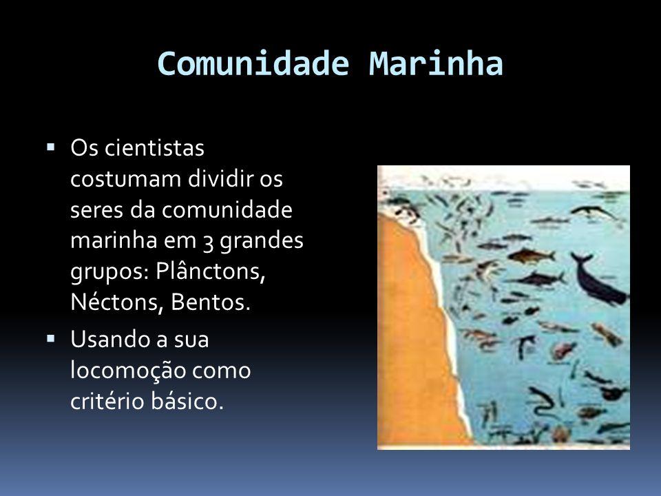 Comunidade Marinha Os cientistas costumam dividir os seres da comunidade marinha em 3 grandes grupos: Plânctons, Néctons, Bentos.