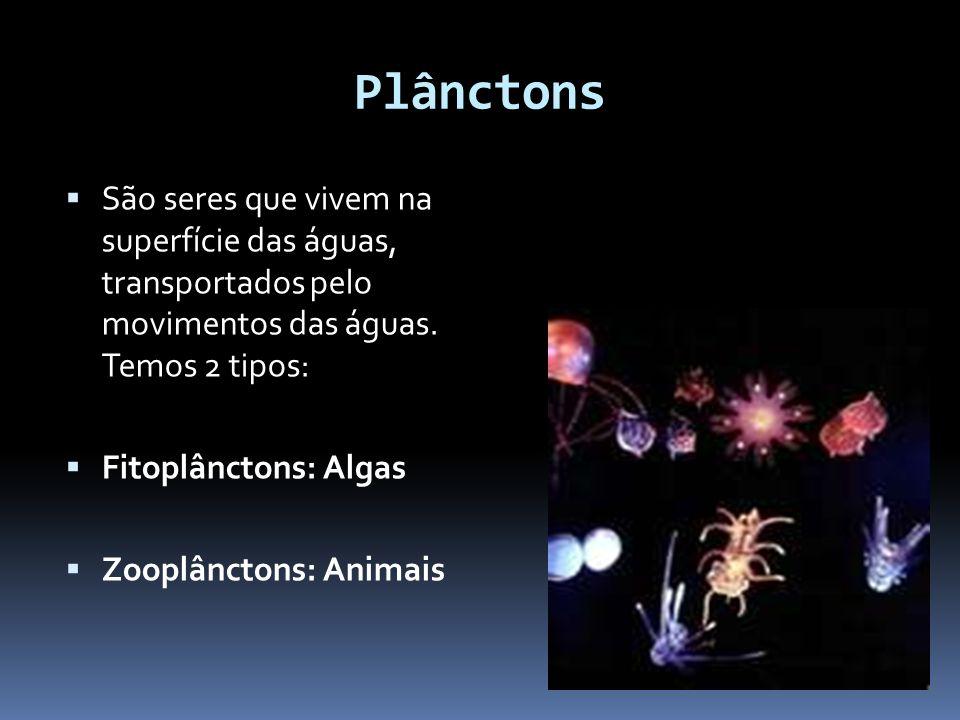 Plânctons São seres que vivem na superfície das águas, transportados pelo movimentos das águas. Temos 2 tipos: