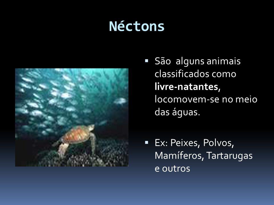 Néctons São alguns animais classificados como livre-natantes, locomovem-se no meio das águas.
