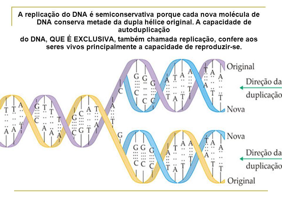 A replicação do DNA é semiconservativa porque cada nova molécula de DNA conserva metade da dupla hélice original. A capacidade de autoduplicação