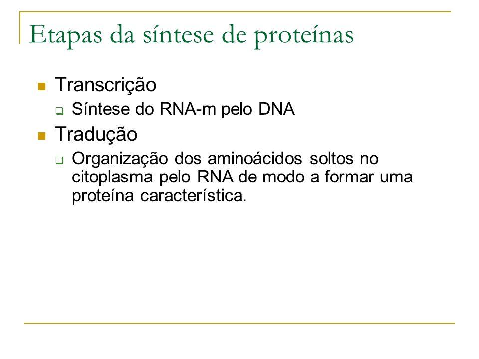 Etapas da síntese de proteínas