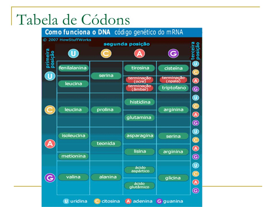 Tabela de Códons