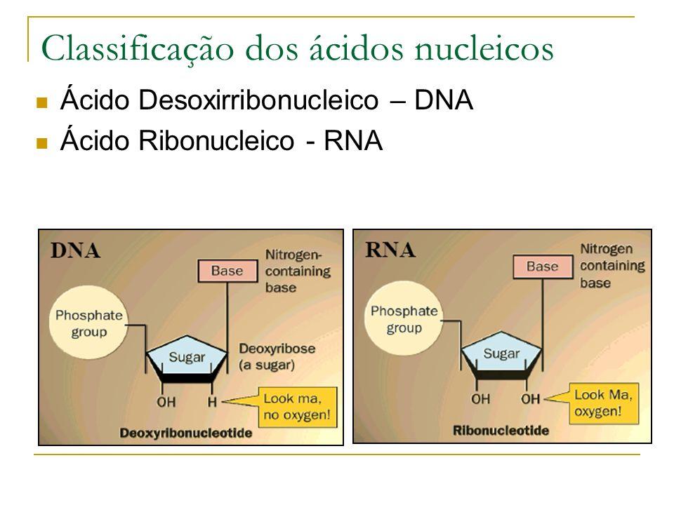 Classificação dos ácidos nucleicos