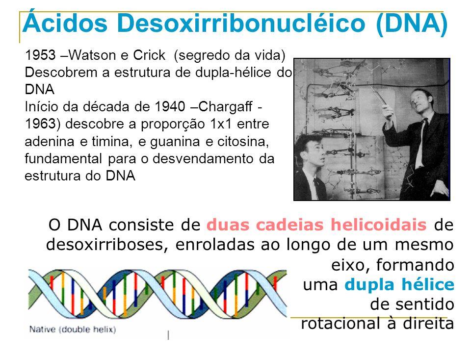 Ácidos Desoxirribonucléico (DNA)