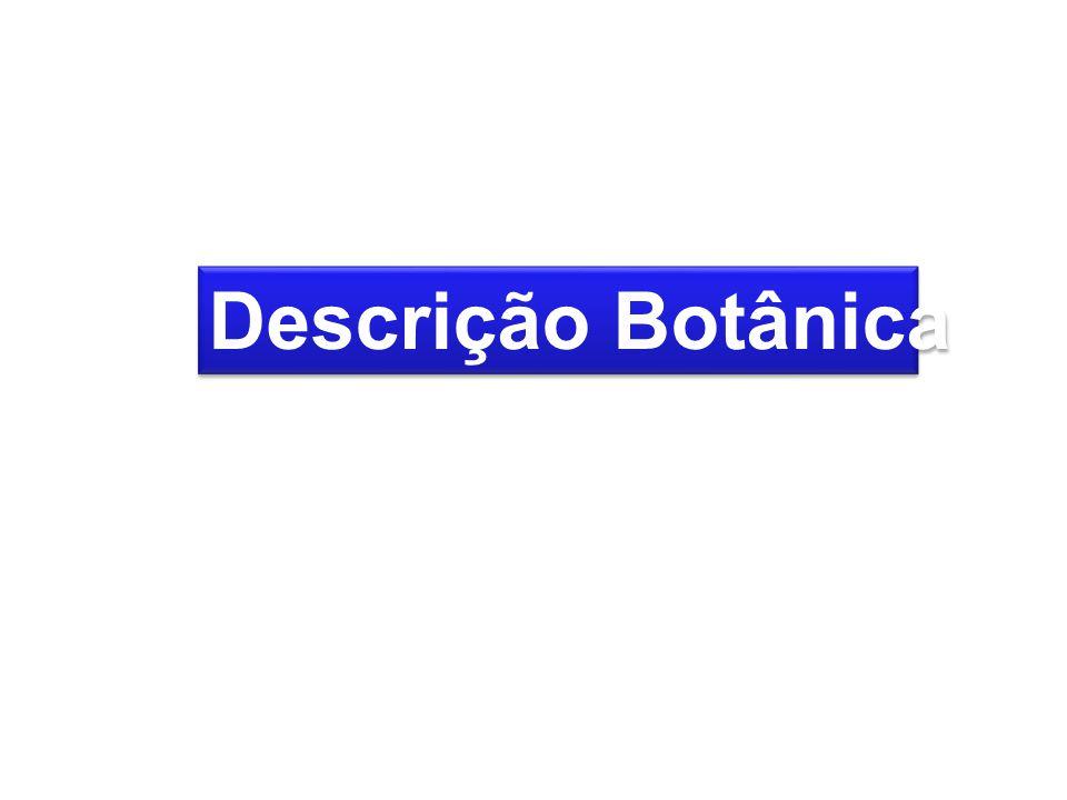 Descrição Botânica