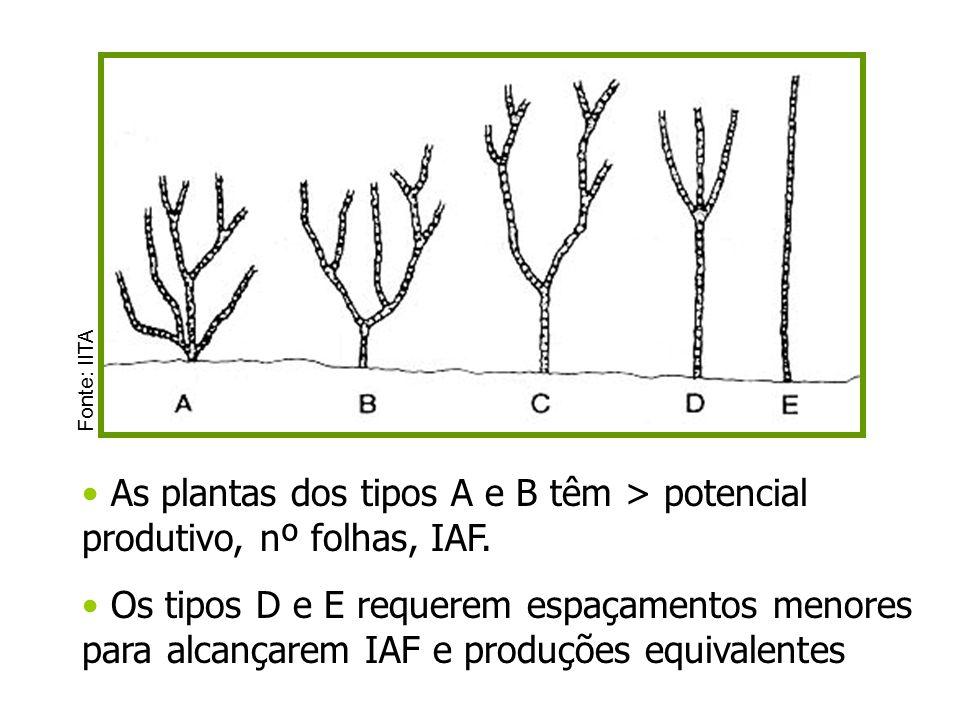 As plantas dos tipos A e B têm > potencial produtivo, nº folhas, IAF.