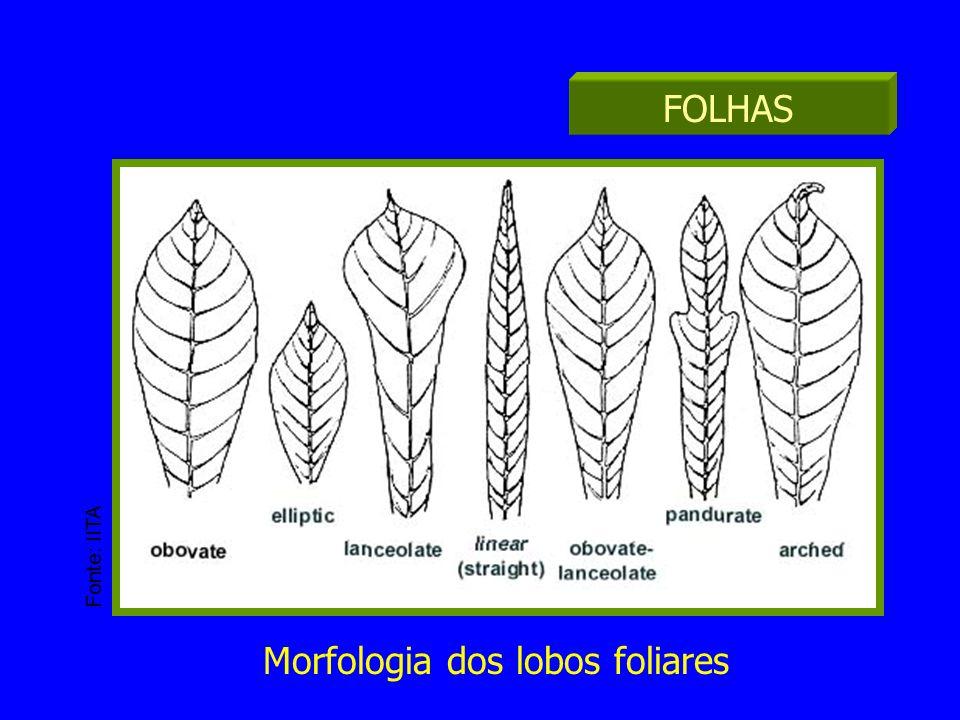 Morfologia dos lobos foliares