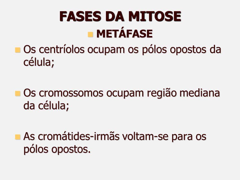 FASES DA MITOSE METÁFASE